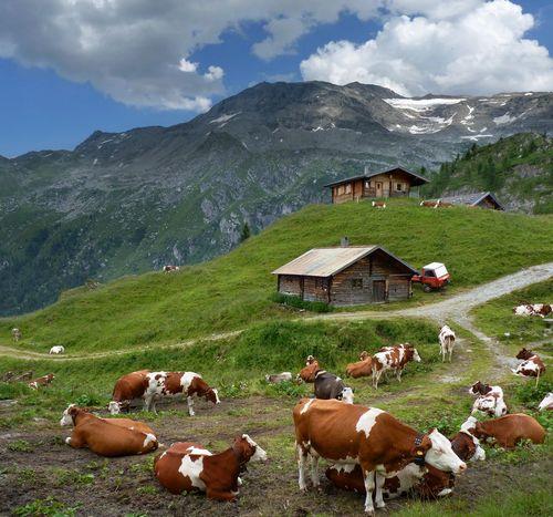 Альпийская горка