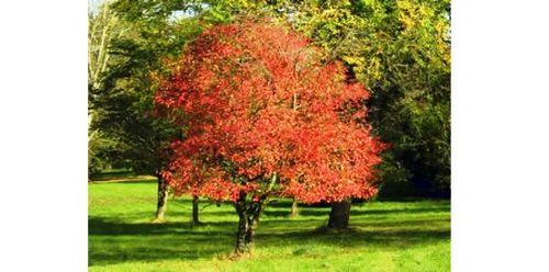Бересклет (фото) – посадка и уход в открытом грунте. как вырастить бересклет: красочный кустарник на вашем участке