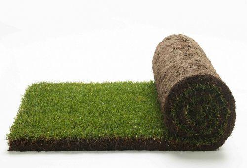 Быстрое преображение территории посредством рулонного газона: особенности укладки летом