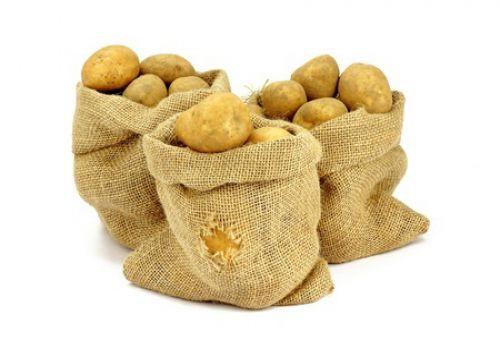 Главные враги картофеля – болезни