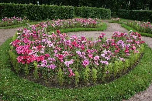 Годеция – посадка и особенности выращивания этого садового цветка. как осуществлять за годецией уход и оберегать цветок от вредителей