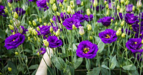 Из каких цветов создать солнечный уголок в саду?