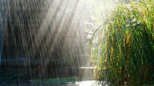 Экономный «дождь»