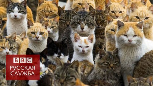 """Как избавиться от кошачьего запаха в квартире: не опускайте руки! советы по избавлению от запаха кошачьей мочи от """"бывалых"""""""