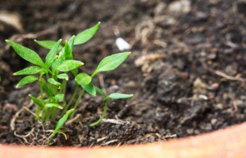 Как самостоятельно определить тип почвы и ее кислотность