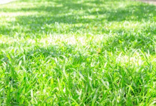 Как выбрать газон