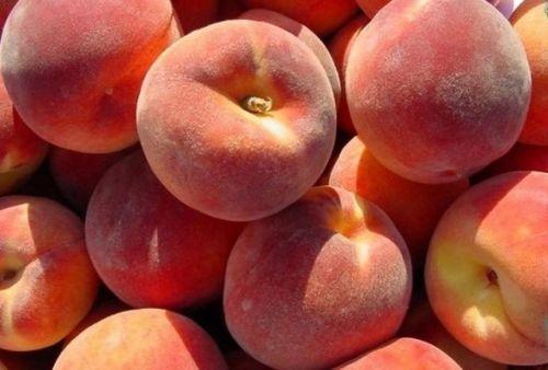 Как вырастить персик из косточки дома: три действенных способа. выбор сорта и уход за персиком, для получения прекрасного урожая