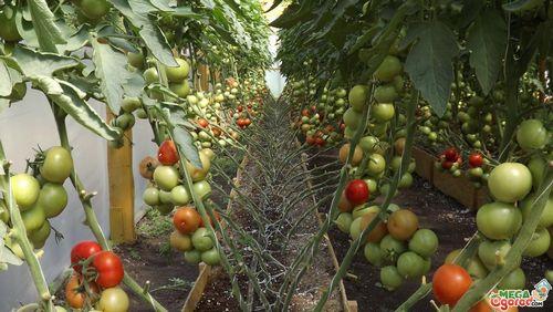 Какие подкормки необходимы клубнике ранней весной. чем подкармливать клубнику весной, летом и осенью: химия или органика