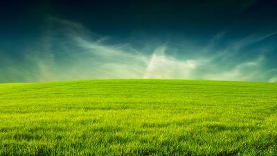 Какие травы можно и нужно давать?