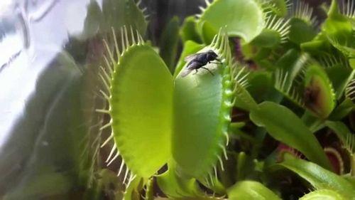 Какими растениями облагородить водоем