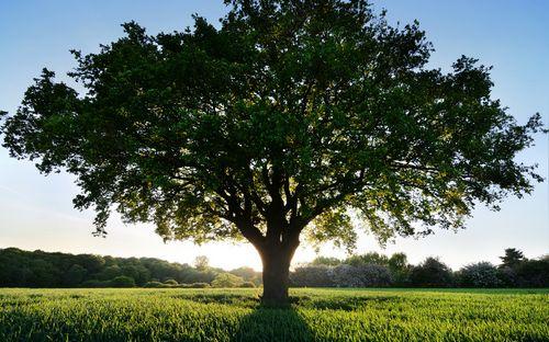 Кирпич или дерево, из чего построить баню