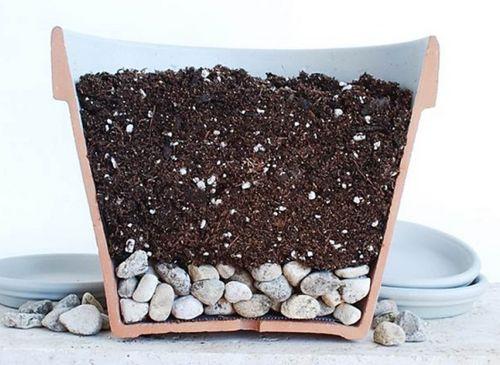 Кливия: посадка, выращивание, уход (фото). основные проблемы при выращивании кливии в домашних условиях