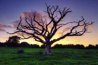 Краски для дерева - надежная защита древесины