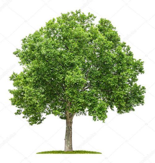 Легкое кружево дерева