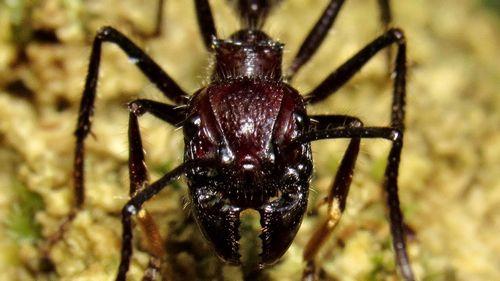 Муравьи на яблоне – как устранить угрозу для сада? чем грозит нападение муравьев на яблоню, бывают ли яблоне полезны муравьи?