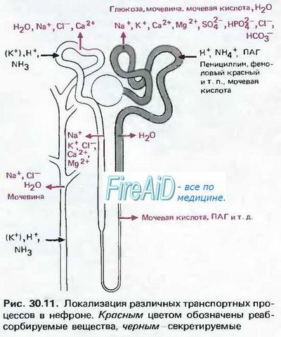 Особенности физиологии