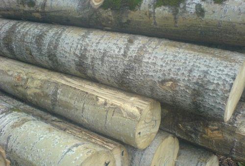 Пиломатериалы, их производство и изделия из дерева