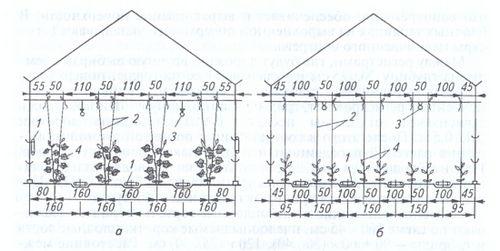 Правильная посадка огурцов в теплицу из поликарбоната. тонкости подготовки рассады лианы и высадка сеянцев в теплицу