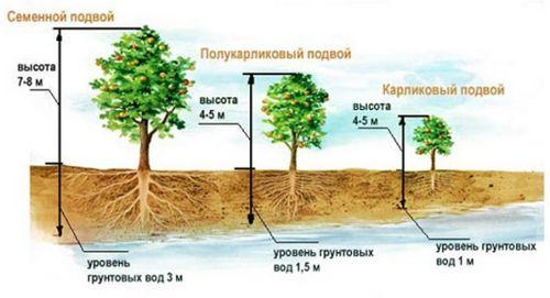 Секреты выращивания яблоневого сада от опытных садоводов. как самостятельно вырастить яблоню: посадка, уход, обрезка, подкормка