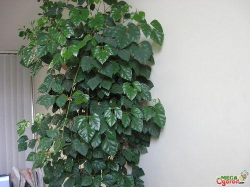 Способны ли комнатные растения повысить уровень жизни? неприметный источник здоровья: монстера, герань, фиалка или кактус