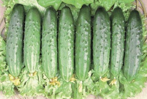 Топ-10 самых урожайных сортов огурцов для открытого и защищенного грунта: фото, описание, характеристики. выбираем урожайные огурцы!