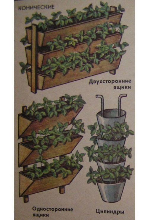 Выращивание клубники на балконе – технология получения хороших урожаев. как вырастить клубнику на балконе?