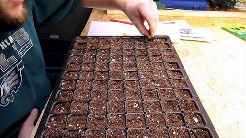 Выращивание рассады баклажанов в домашних условиях – эти капризные синенькие! растим крепкую и здоровую рассаду баклажанов сами