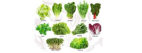 Выращивание салата на участке. способы выращивания сочной зелени салата, получение хороших урожаев, подкормки и уход