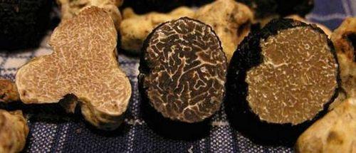 Выращивание трюфелей – прибыльный бизнес. как вырастить трюфели в открытом грунте и теплице: секреты технологии