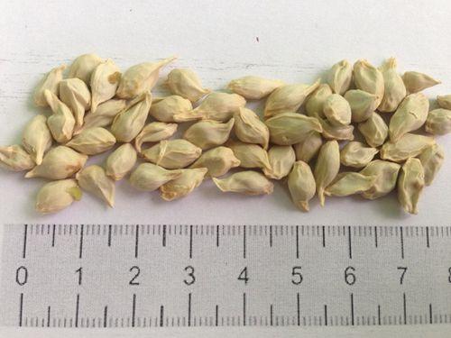 Вырастить мандарин из косточки в домашних условиях – это интересно! условия и секреты выращивания мандарина из косточки дома
